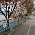 Chuncheon ⟷ Hanam Rider Cherry Blossoms River
