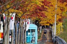 A picture of colorful leaves along a major street in Ulsan, South Korea.