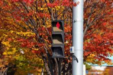Tips - Safety - Pedestrian Light Fall Leaves