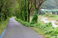 Ocheon Bike Path - Yeonpung Jeungpyeong - Bike Path Stream Trees
