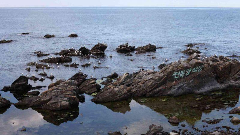 Donghae ⟷ Gangneung Seagulls on Rocks