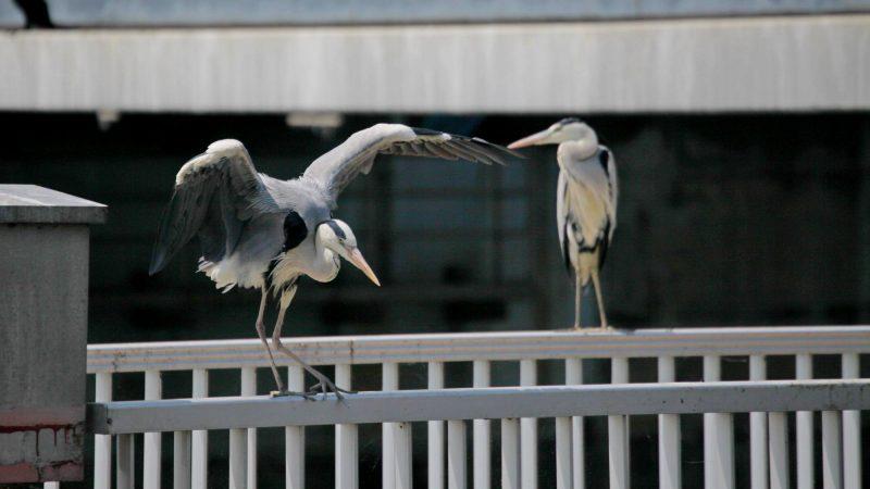 Geumgang Bike Path - Buyeo Gunsan - Cranes On Geumgang Lock