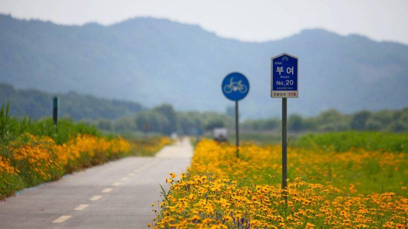 Geumgang Bike Path - Buyeo Gunsan - Straight Path Flowers Signs