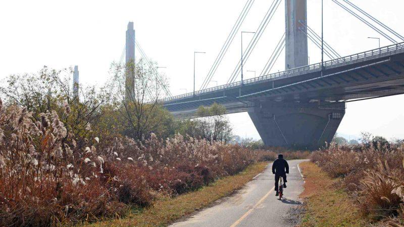 Ocheon Bike Path - Jeungpyeong Sejong - Biker Under Cable Stay Bridge on Miho Stream