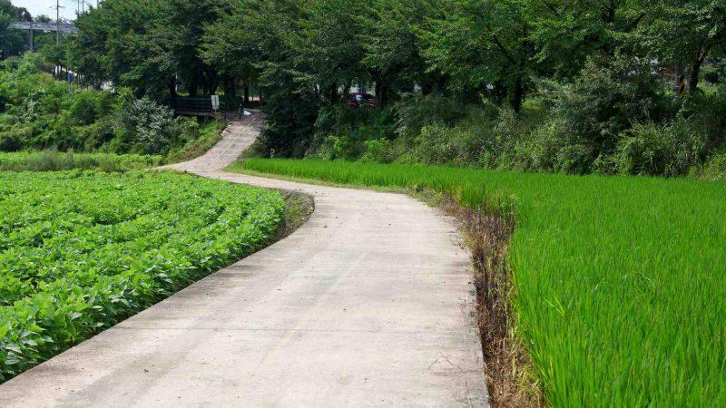 Saejae Bike Path - Chungju Sangju - Farmer Road Near Sangju