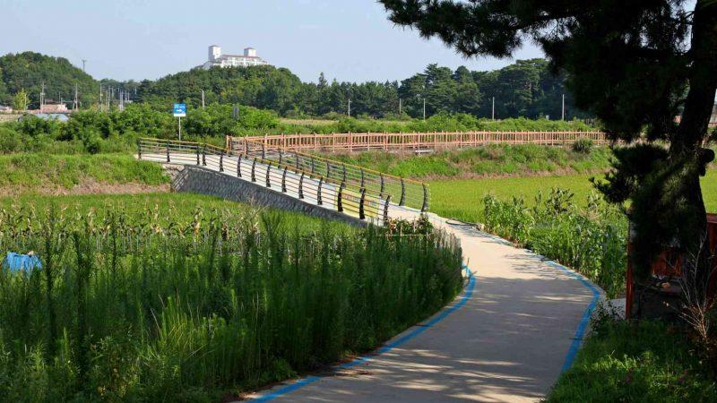 Sokcho ⟷ Daejin Bike Path Boardwalk Green Foilage