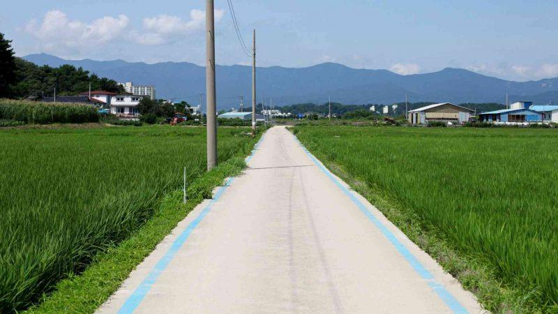 Sokcho ⟷ Daejin Blue Lines Rice Fields
