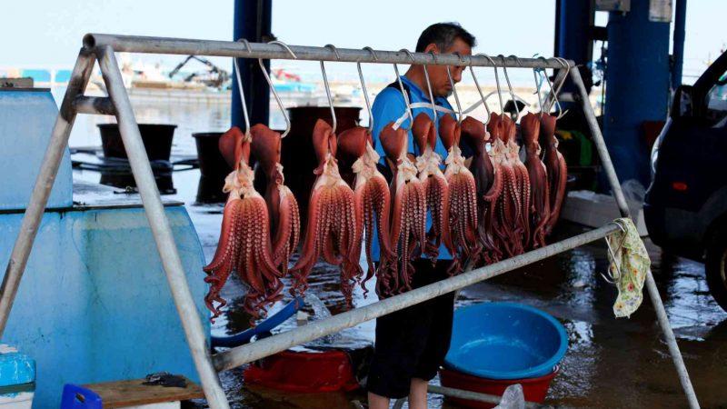 Sokcho ⟷ Daejin Octopus