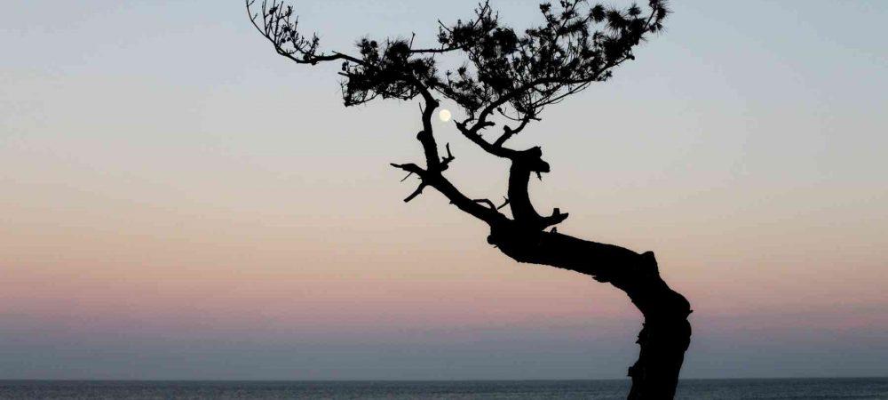 Yeongdeok ⟷ Uljin Moon in Tree
