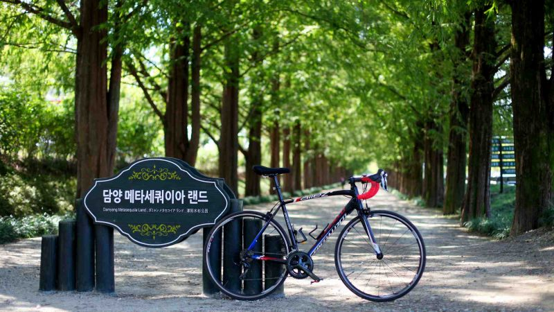 Yeongsangang Bike Path - Damyang Gwangju - Damyang Mesoquoia Road and Bike