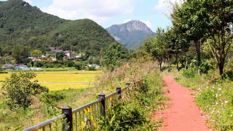 Yeongsangang Bike Path - Damyang Gwangju - Mountain and Bike Path