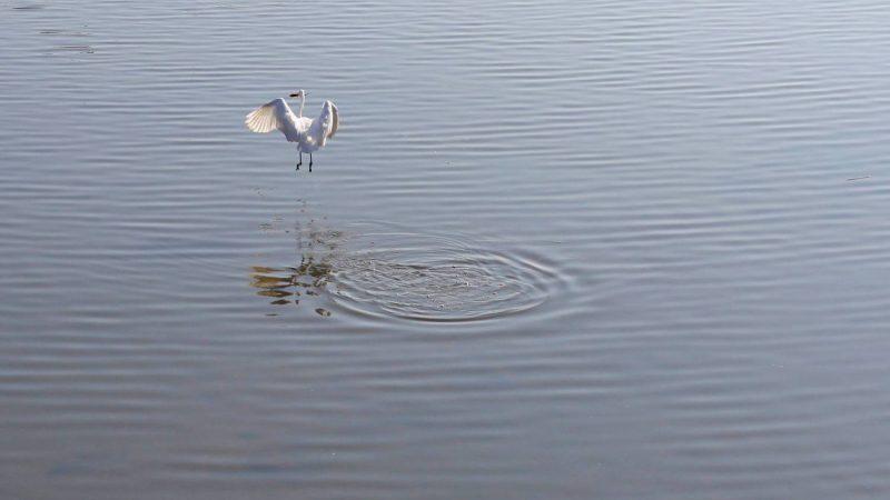 Yeongsangang Bike Path - Gwangju Mokpo - Crane Flying in Yeongsan River
